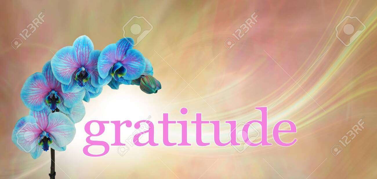 Blue Orchid Floral Gratitude Message Banner Blue And Pink Stock Photo Picture And Royalty Free Image Image 144047409