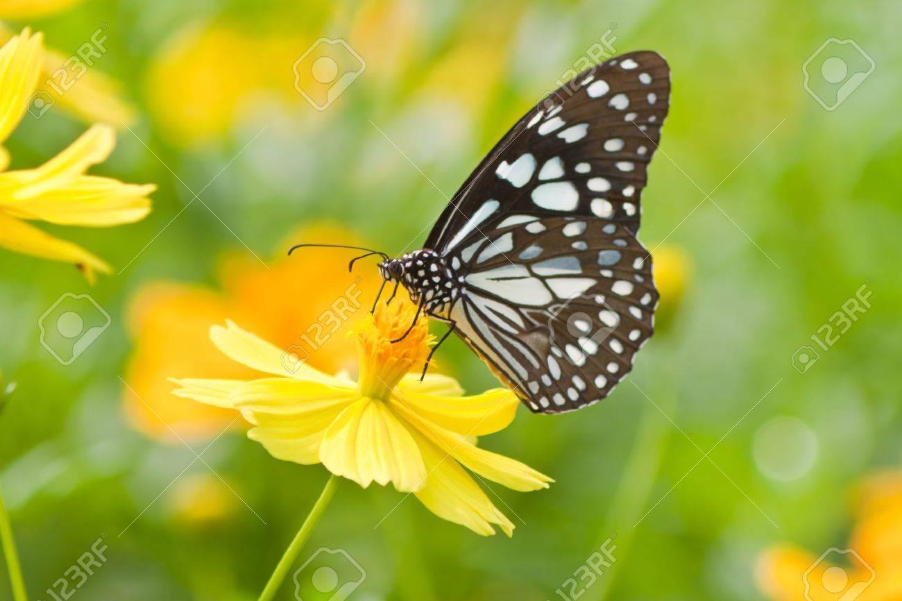 花蝶します ロイヤリティーフリーフォト ピクチャー 画像