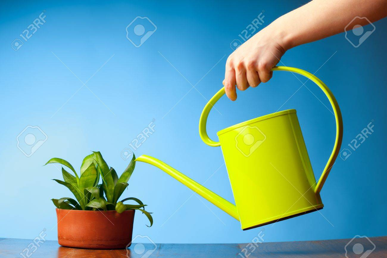 hand watering a plant with watering-can Stock Photo - 9435202
