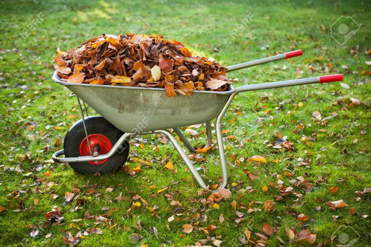 wheelbarrow full of dried leaves Stock Photo - 18098799