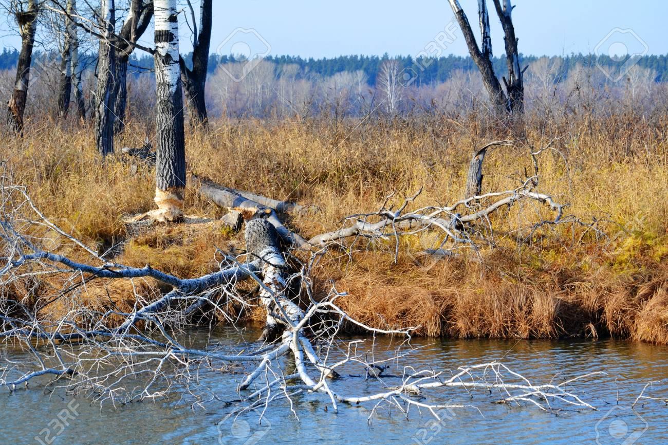 Beautiful nature Altaya pleases eye of the watcher - 104788746