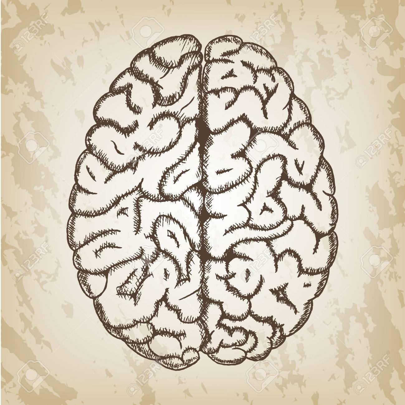 Hand Gezeichnet Vektor-Illustration - Menschliche Gehirn Skizze Mit ...