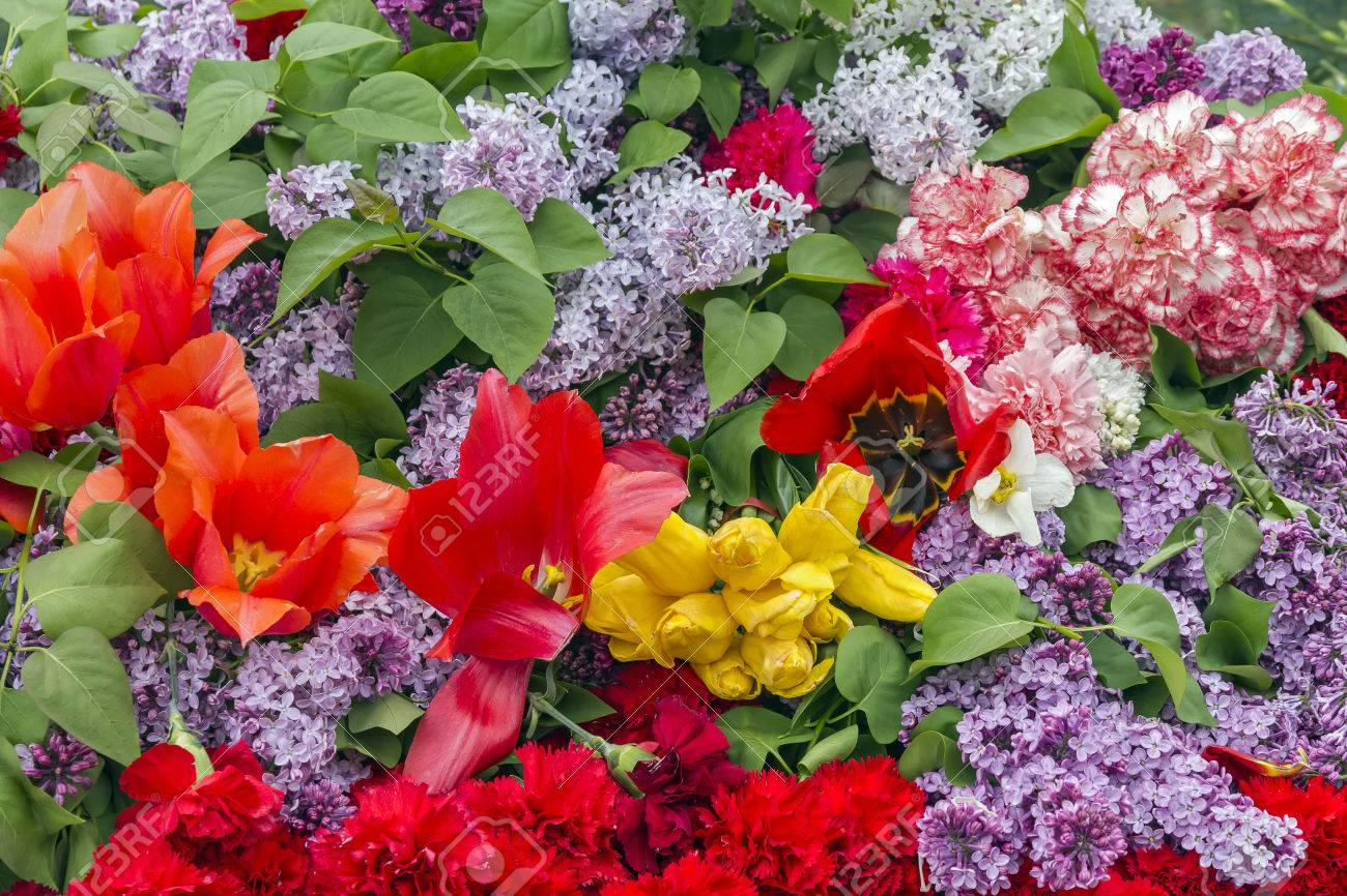 Background of flowers pinks lilacs and tulips stock photo picture background of flowers pinks lilacs and tulips stock photo 41222616 mightylinksfo