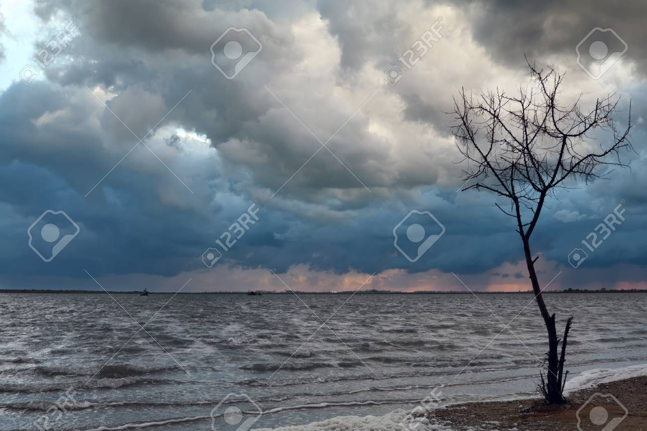 Lonely tree and heavy clouds Stock Photo - 9140968