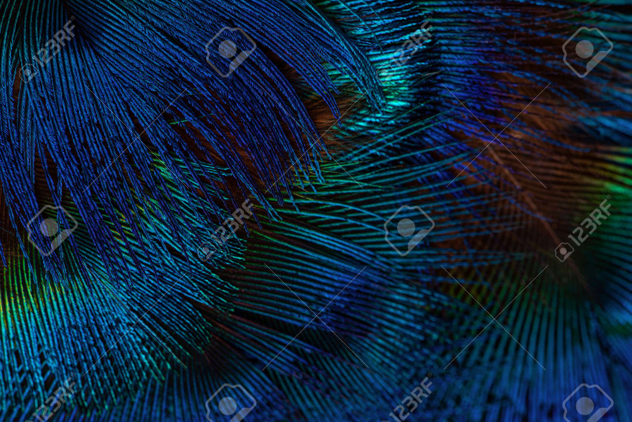 Dark blue feathers background. Exotic texture feathers background, closeup. - 154981443