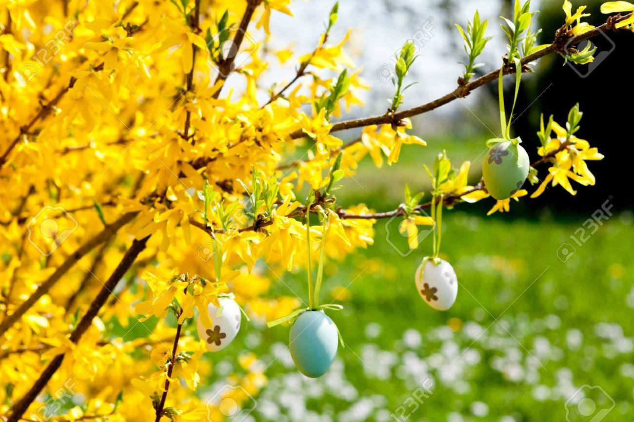 Easter decoration outdoor - Stock Photo Easter Egg Decoration Hanging On Forsythia Tree Outdoor In Spring