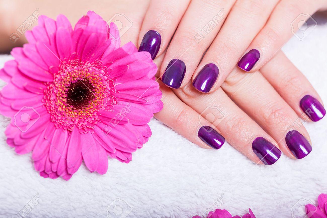 Banque d\u0027images , Femme avec de beaux ongles manucurés recouverts de vernis  à ongles violet moderne, émail ou de laque afficher ses doigts le long  d\u0027une