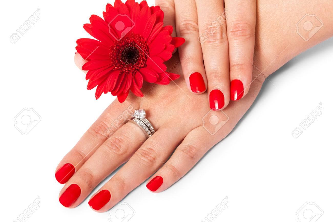 Hermosas Manos De Una Mujer Elegante De Moda Con Las Uñas Rojas Cuidados Anillos De Piedras Preciosas Y Una Fresca Margarita Gerbera Roja Sobre Un