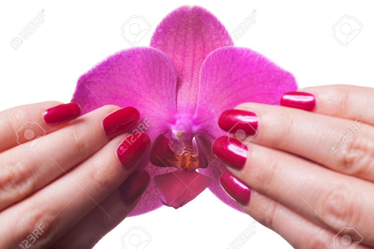 Manicured Nails Painted A Deep Red Caress Dark Pink Flower Pedals ...