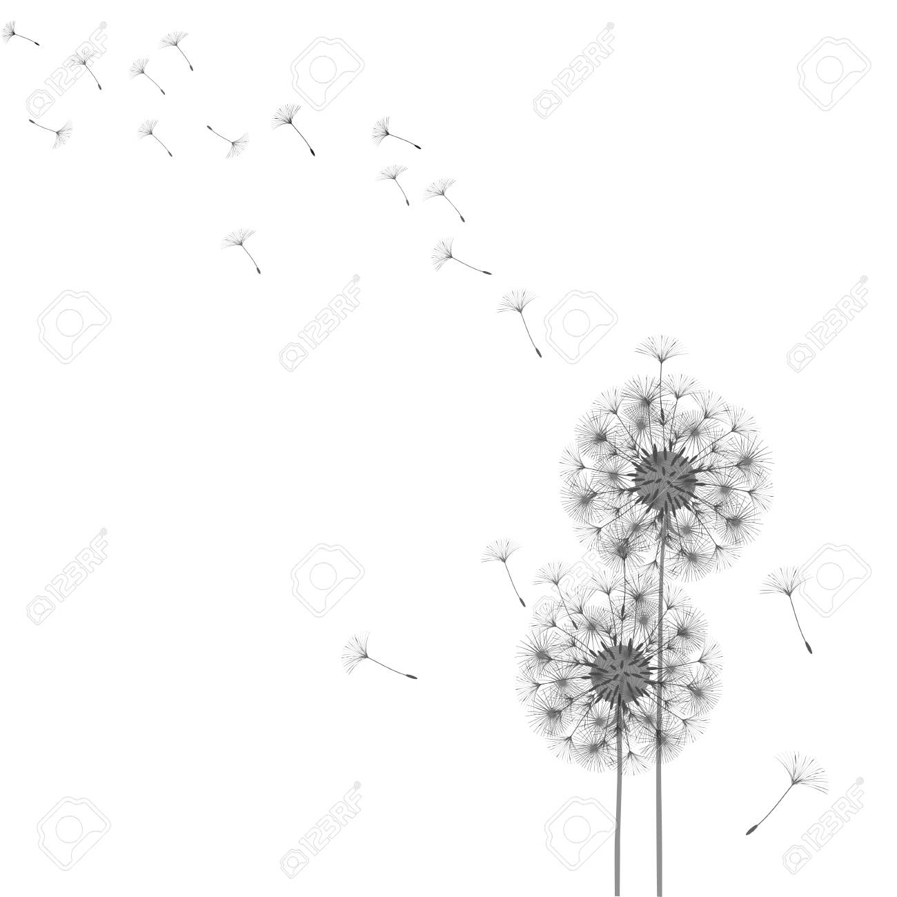 abstract dandelion template design royalty free cliparts vectors