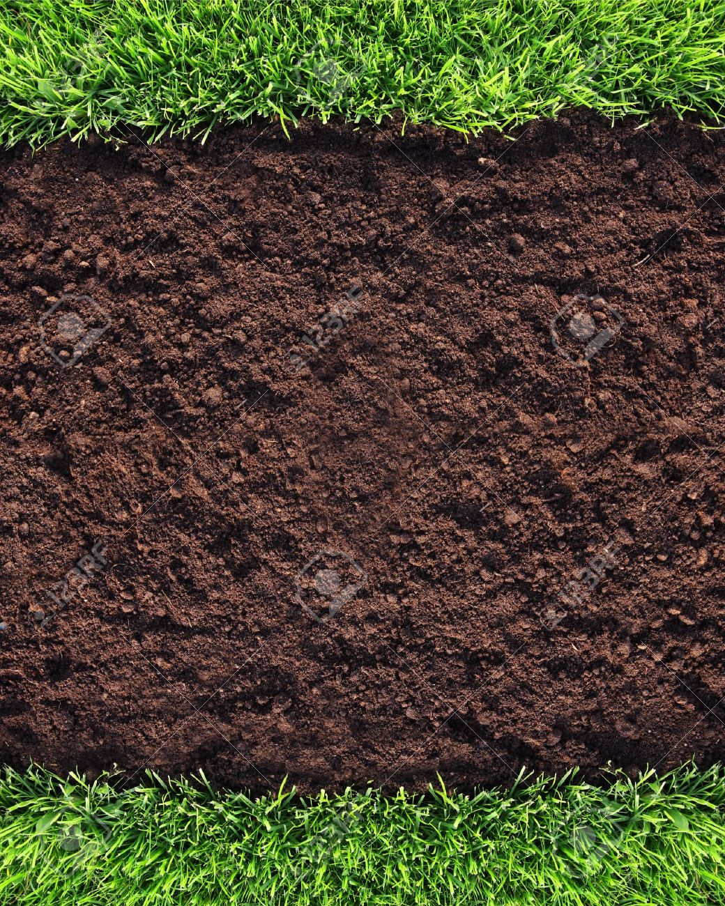 Healthy grass and soil background Stock Photo - 9726613