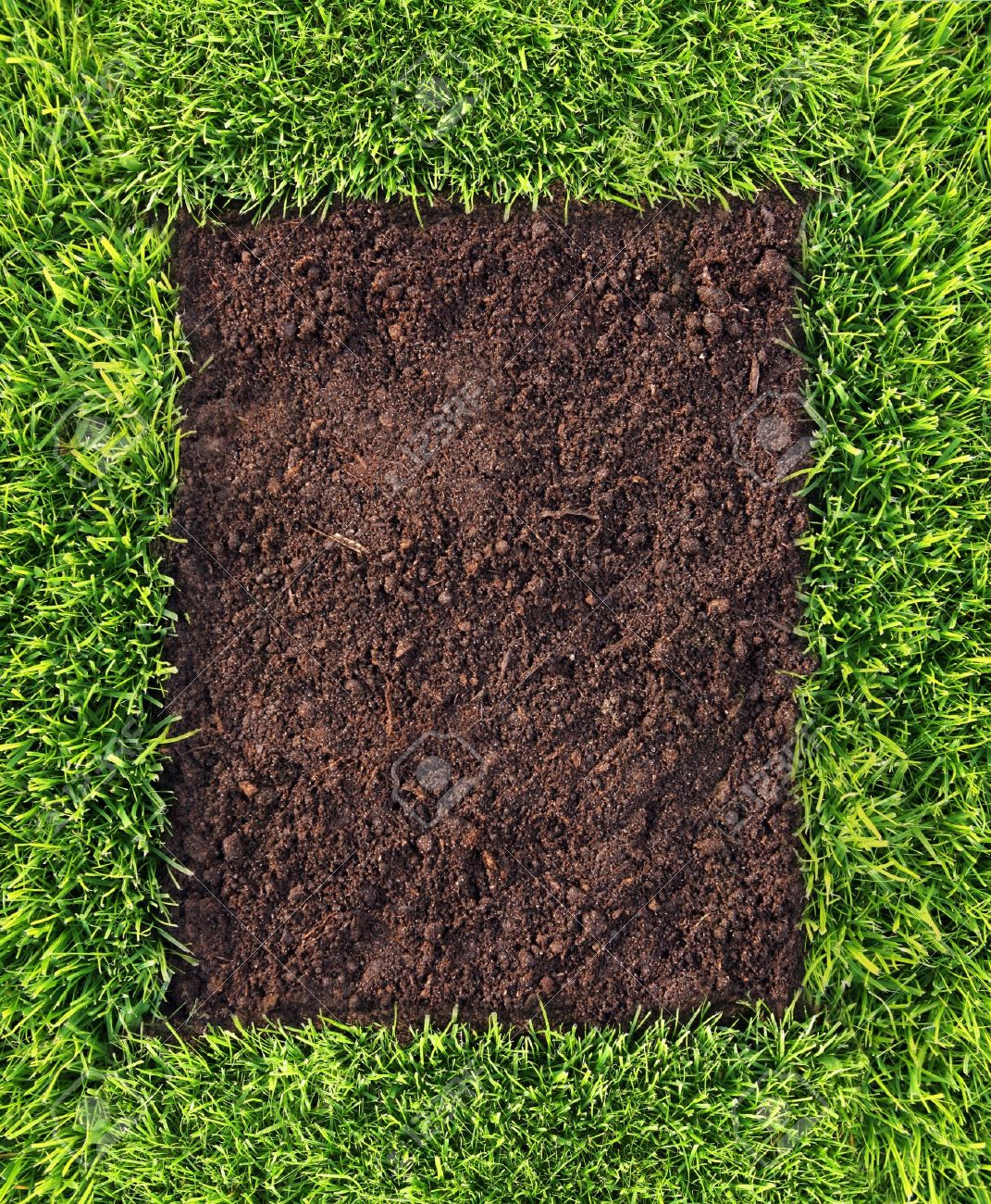 Healthy grass and soil background Stock Photo - 10384288
