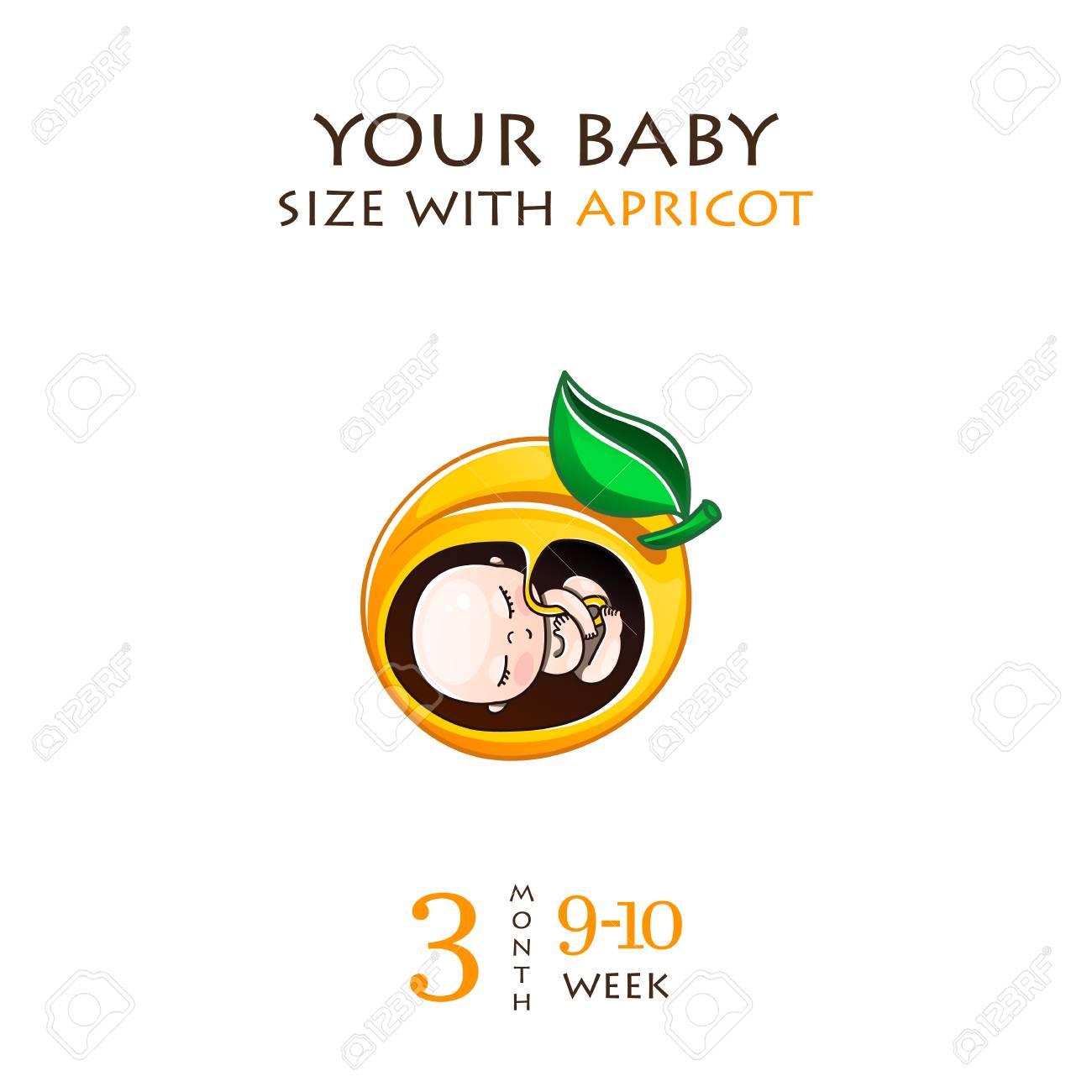 10 Week Pregnancy Baby Size