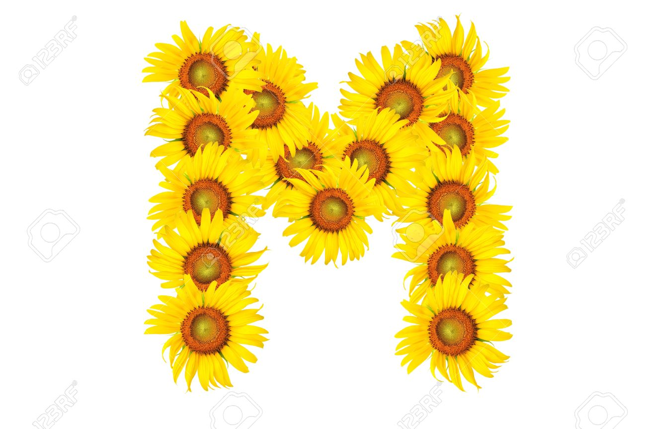 Beautiful Yellow Sunflower Alphabet Isolated Capital Letter