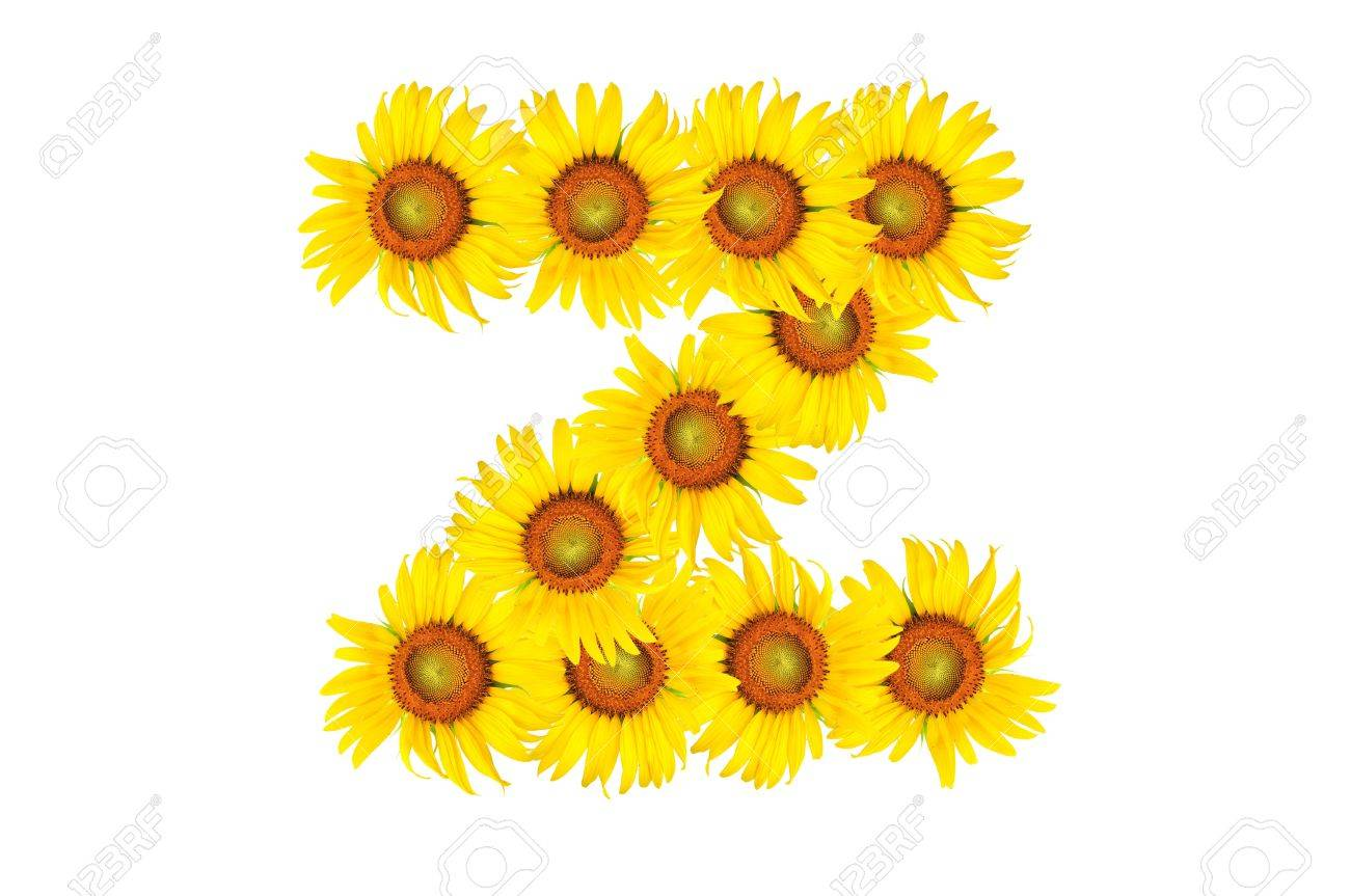 Beautiful yellow Sunflower alphabet, isolated  capital letter