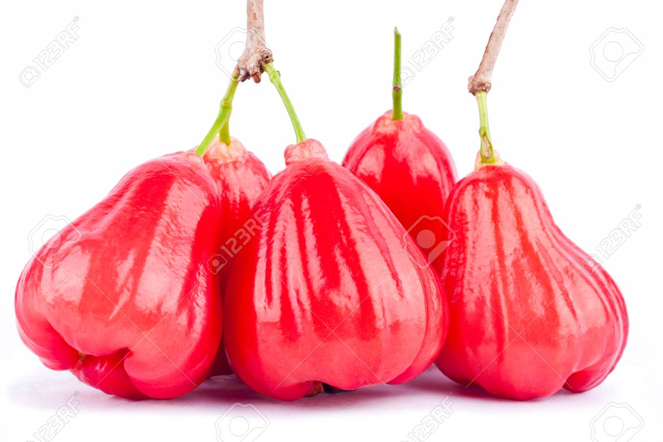 Photos Of Rose Apple Fruit