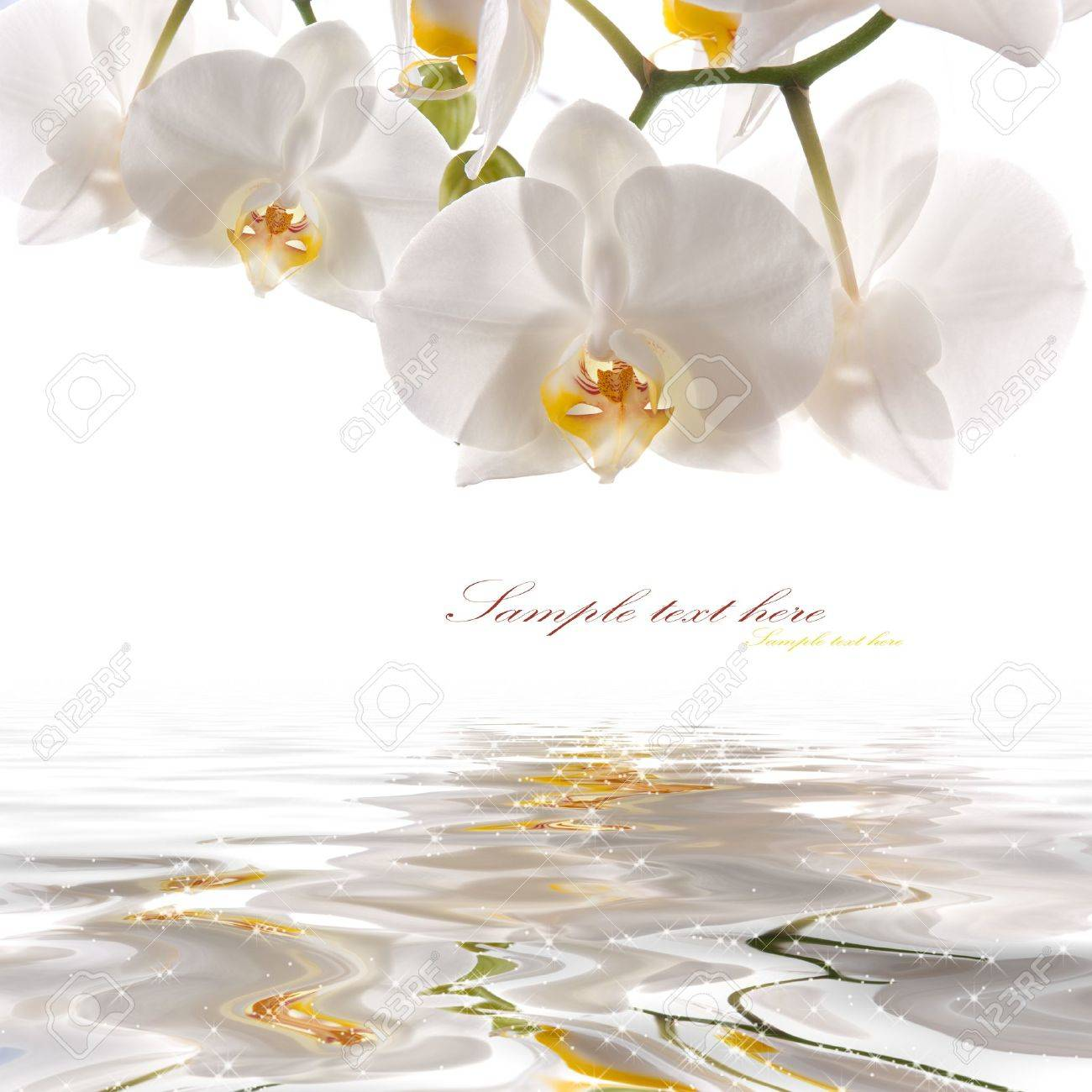 postcard. white orchids on the water Stock Photo - 10493098