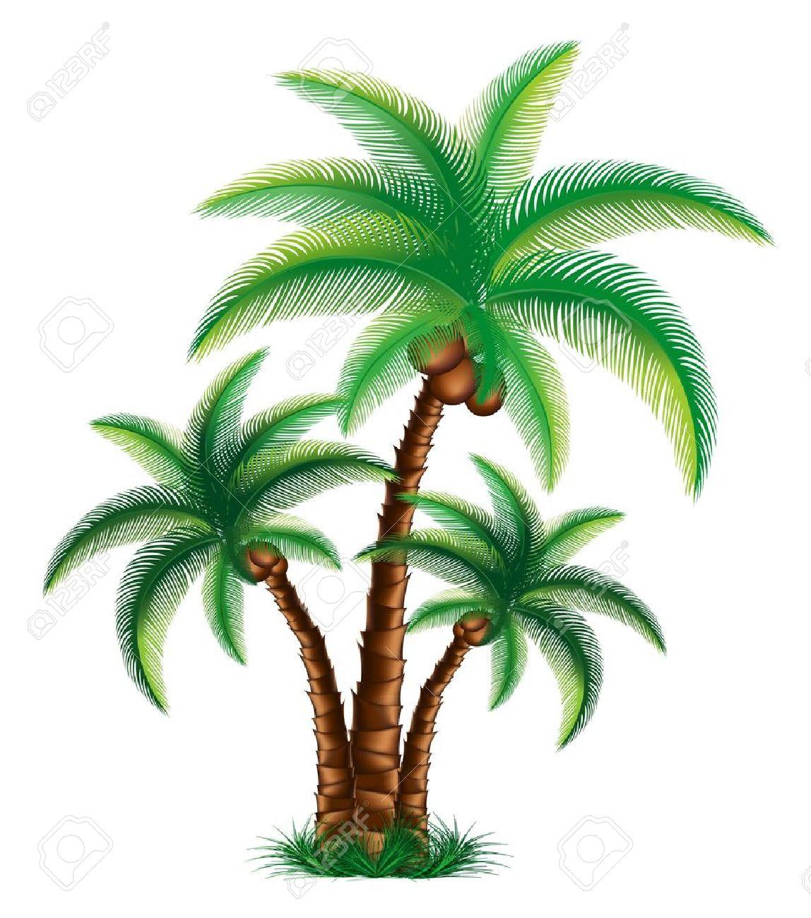 Coconut Palm Tree Clip Art Coconut Tree Tropical Palm