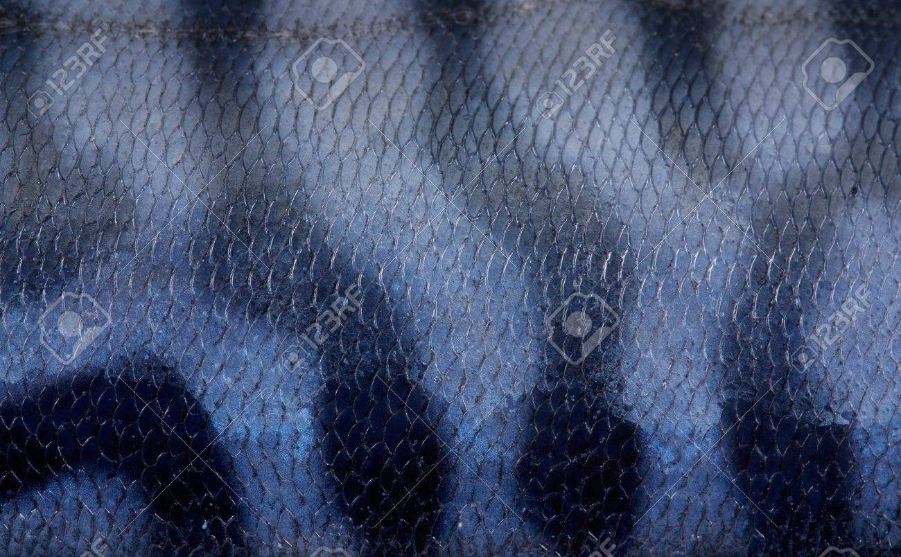 texture of mackerel Stock Photo - 13357617