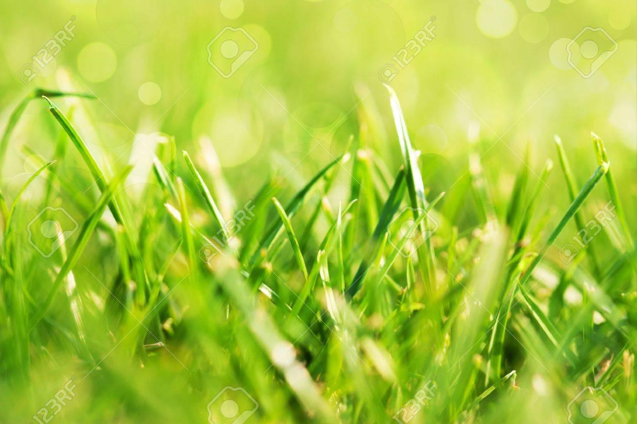 Resultado de imagen para verde  y el campo