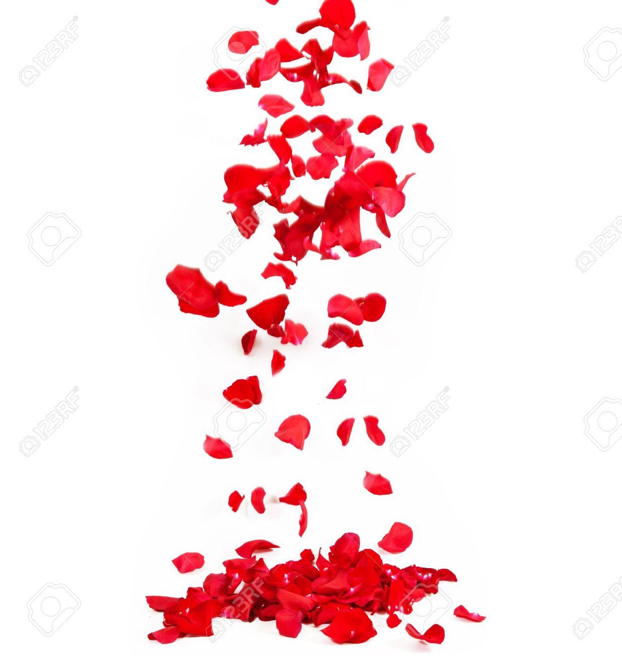 Falling petals of roses - 18513936