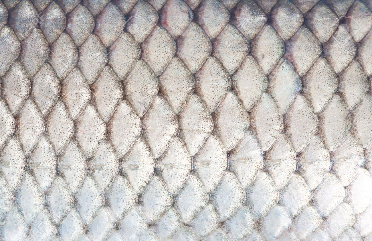 texture of fish scales close-up - 22230678