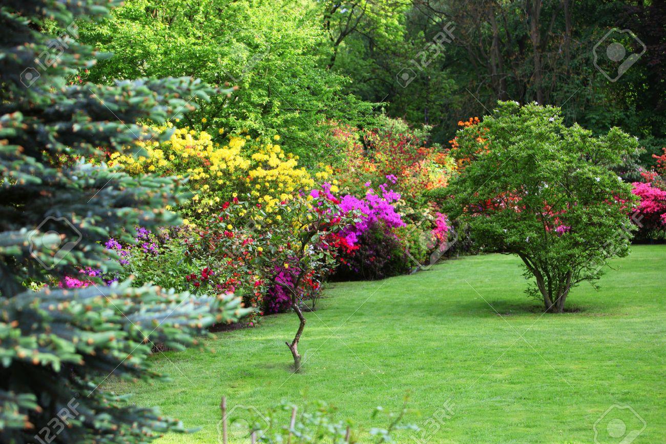 Arbustes à Fleurs Colorées Dans Un Jardin De Printemps Dans Les Tons ...
