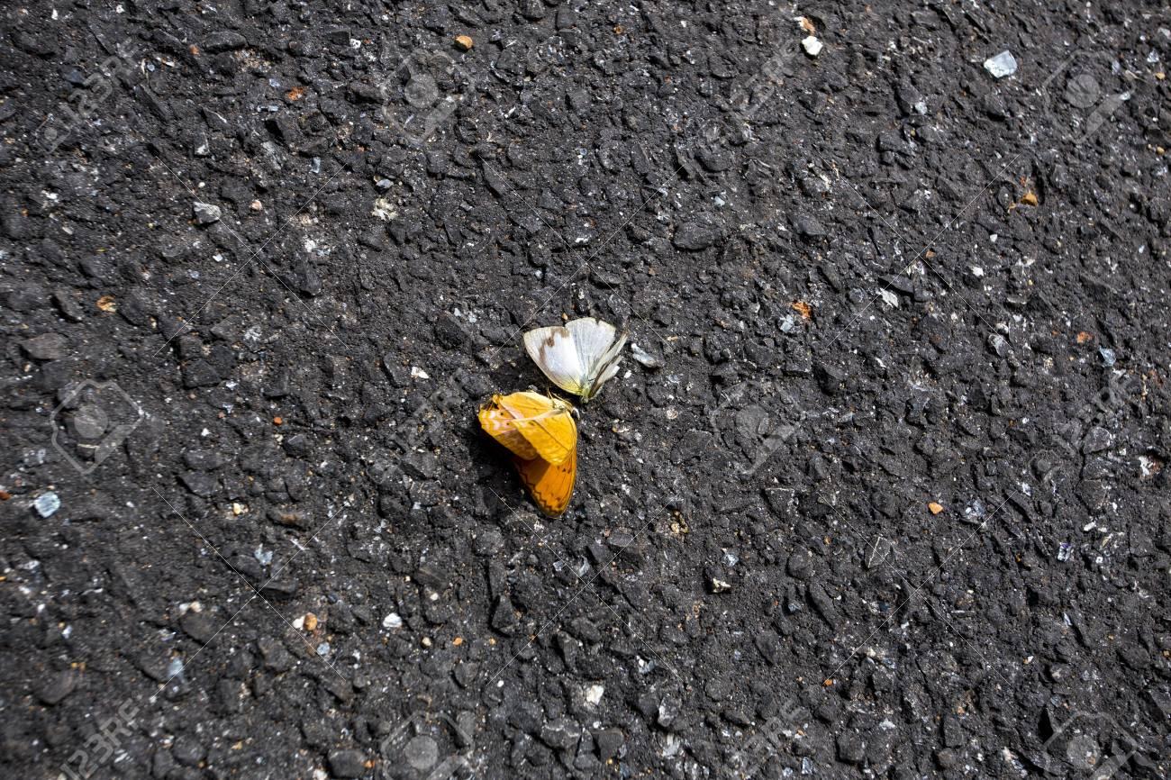 蝶のカップルが野垂れ死に。 ロ...