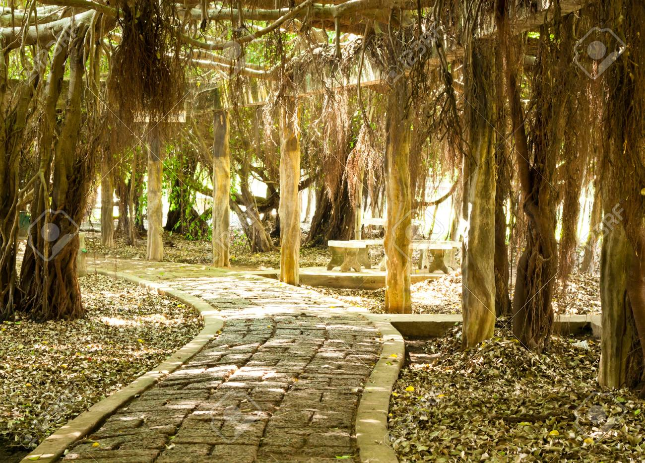 walk way with tree root in park Stock Photo - 16530916