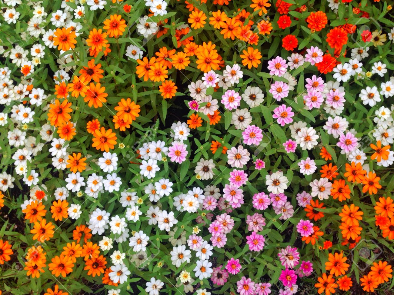 Colorful flowers in the garden topview
