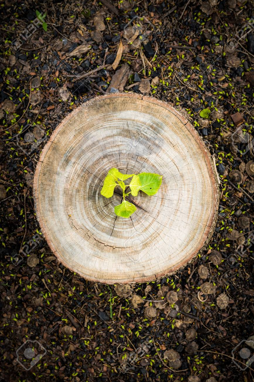 Green leaves with wood stump. New development and renewal as a business concept - 38799387