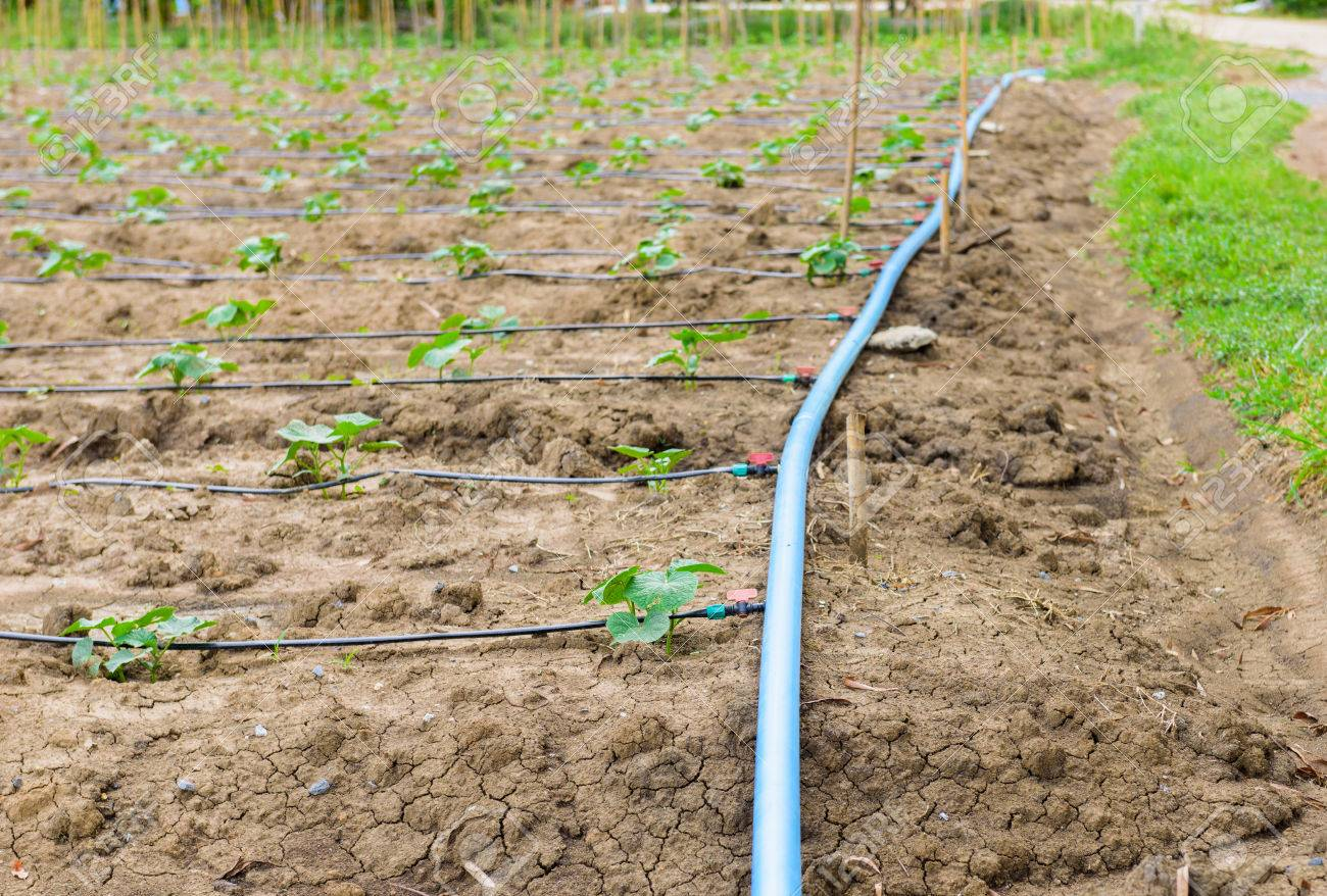 Drip Irrigation System Stock Photos. Royalty Free Drip Irrigation ...
