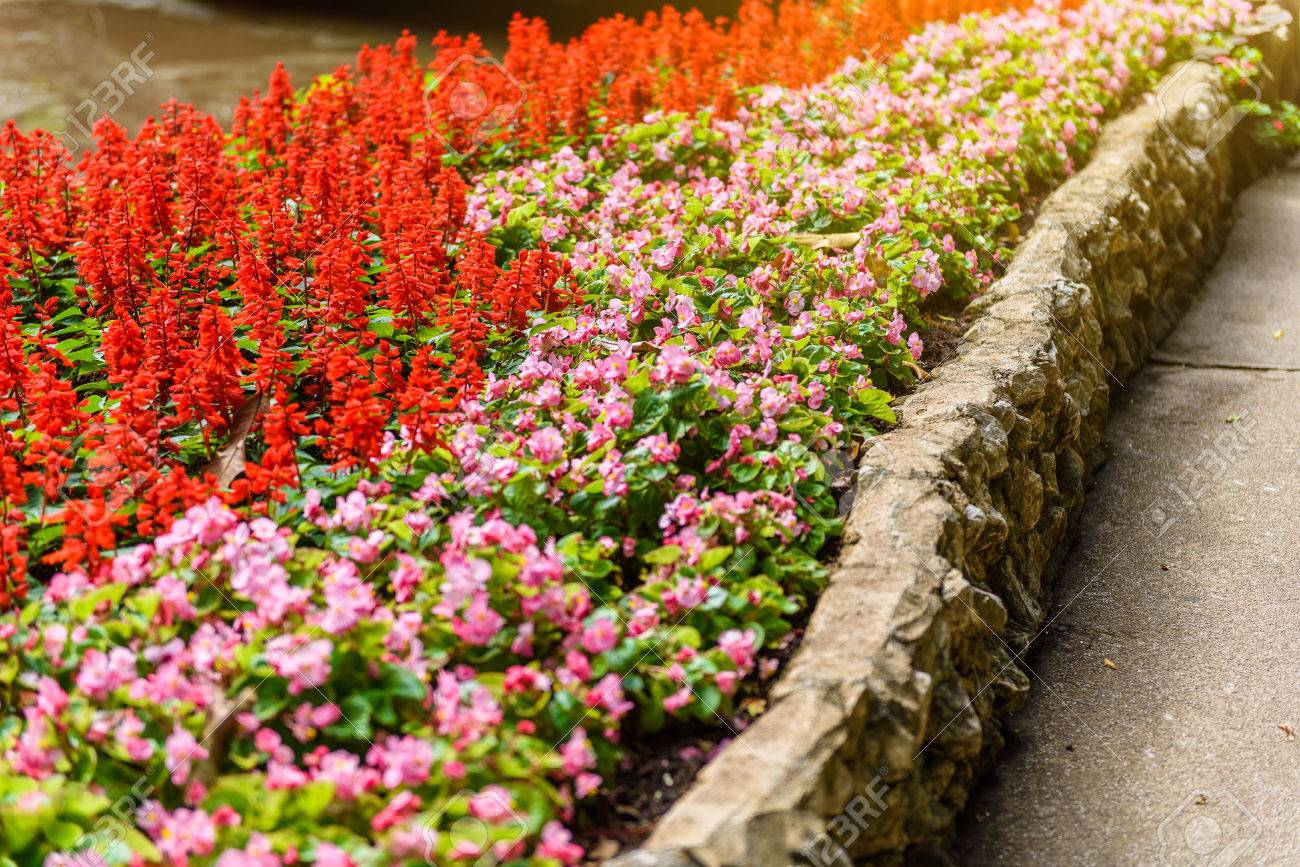 Pretty Coral Pink Flowers Numerous Bright Flowers Of Tuberous
