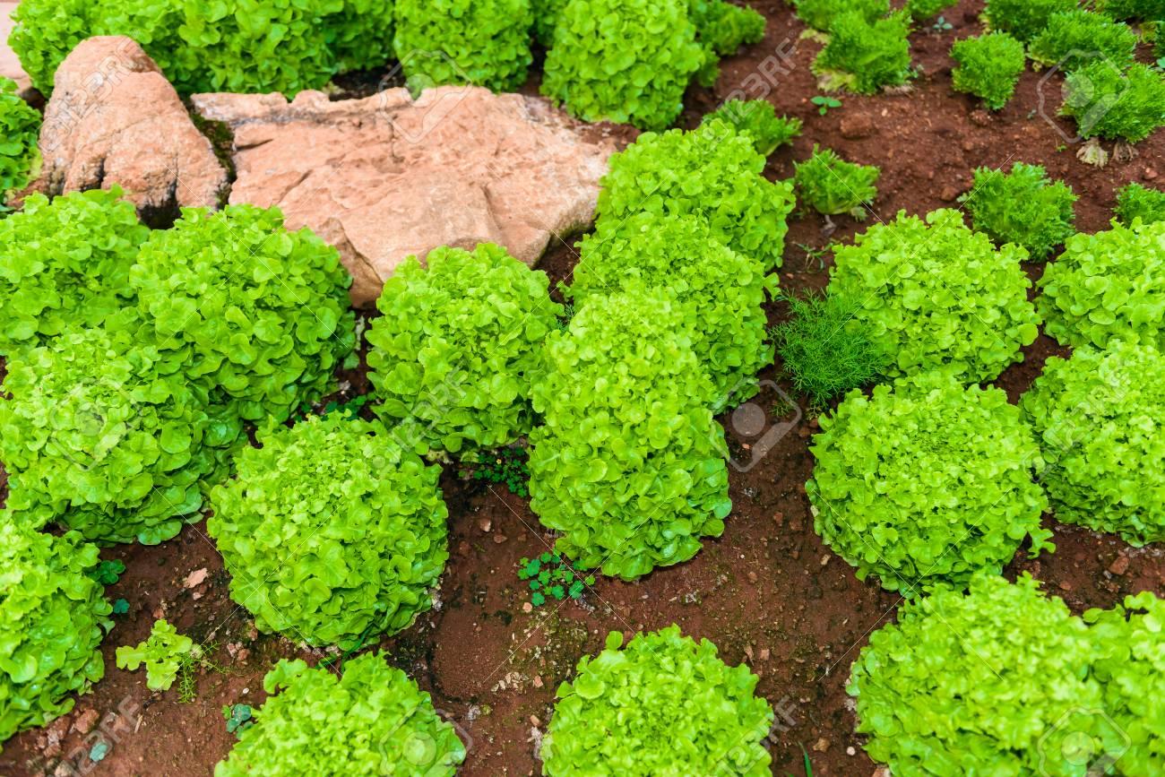 Herbes De Jardin Potager Et Legumes Dans Le Jardin Formel D Arriere