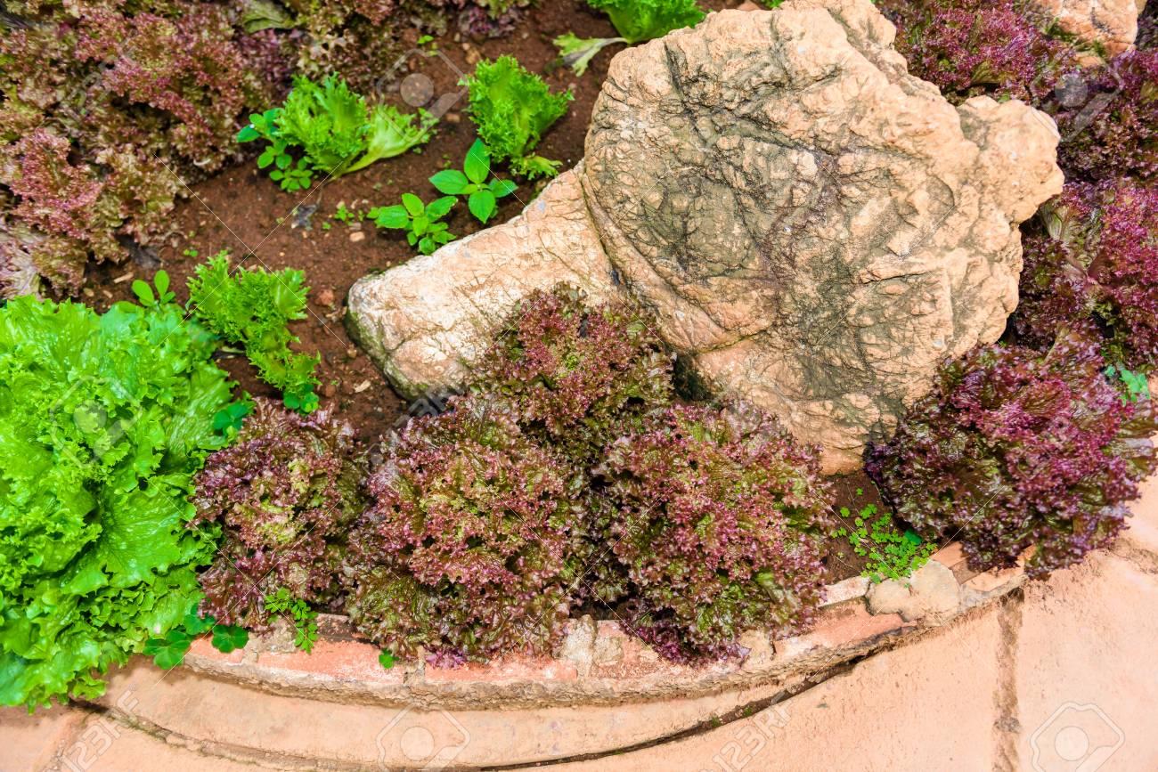Vegetable Garden Herbs, And Vegetables In Backyard Formal Garden ...