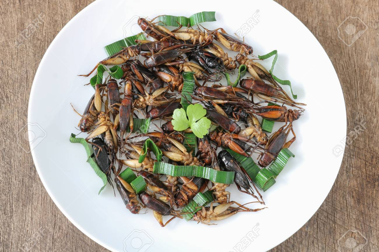 Insects food.Fried crickets with pandan top view.Crickets are rich protein and good fats.Insects are food future for all people - 111229446