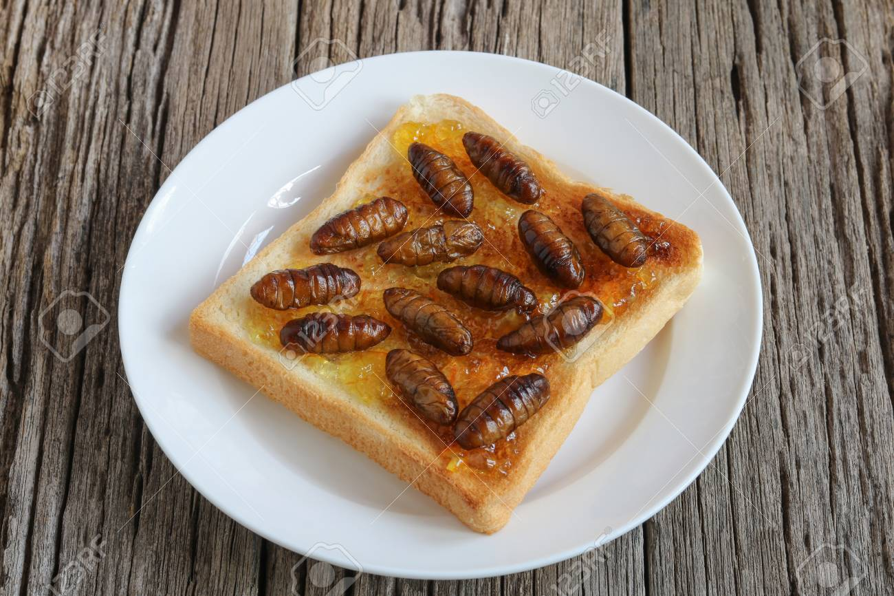 Insects food.Fried silkworm pupae with toast.Silkworm pupae are rich protein and good fats.Insects are food future for all people - 111264728