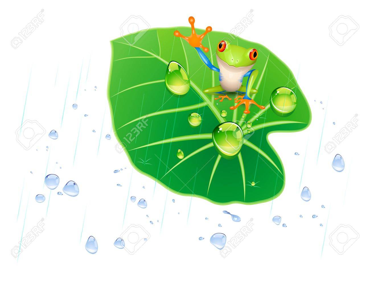 frog on the lotus leaf in the rain. Stock Vector - 12812133