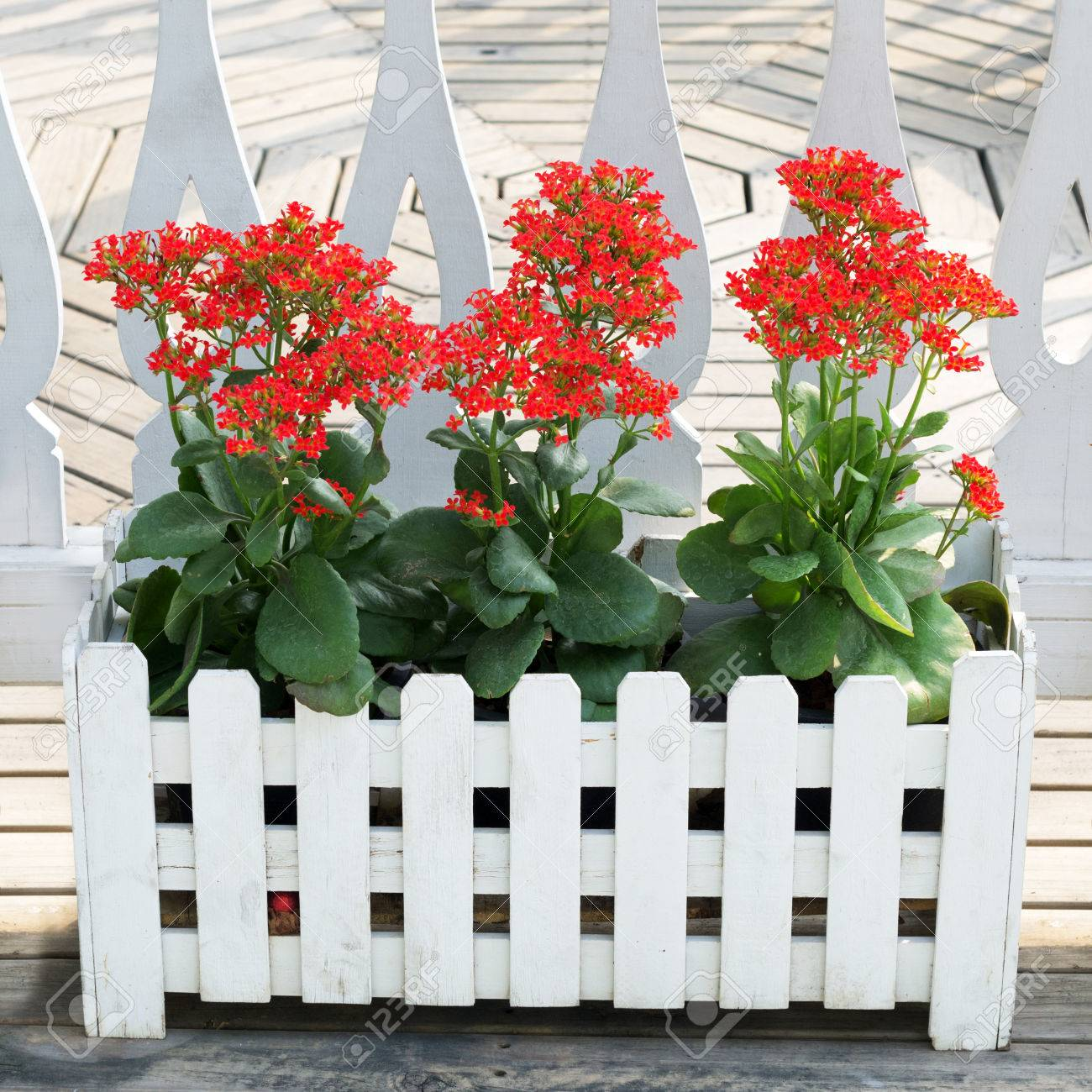 Kalanchoe Is A Potted Ornamental The Plant Is Easily Grown Grown