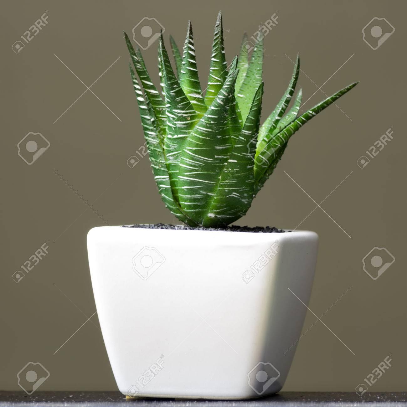 Aloe Vera En Pequeñas Macetas Blancas Usando El Interior Fotos