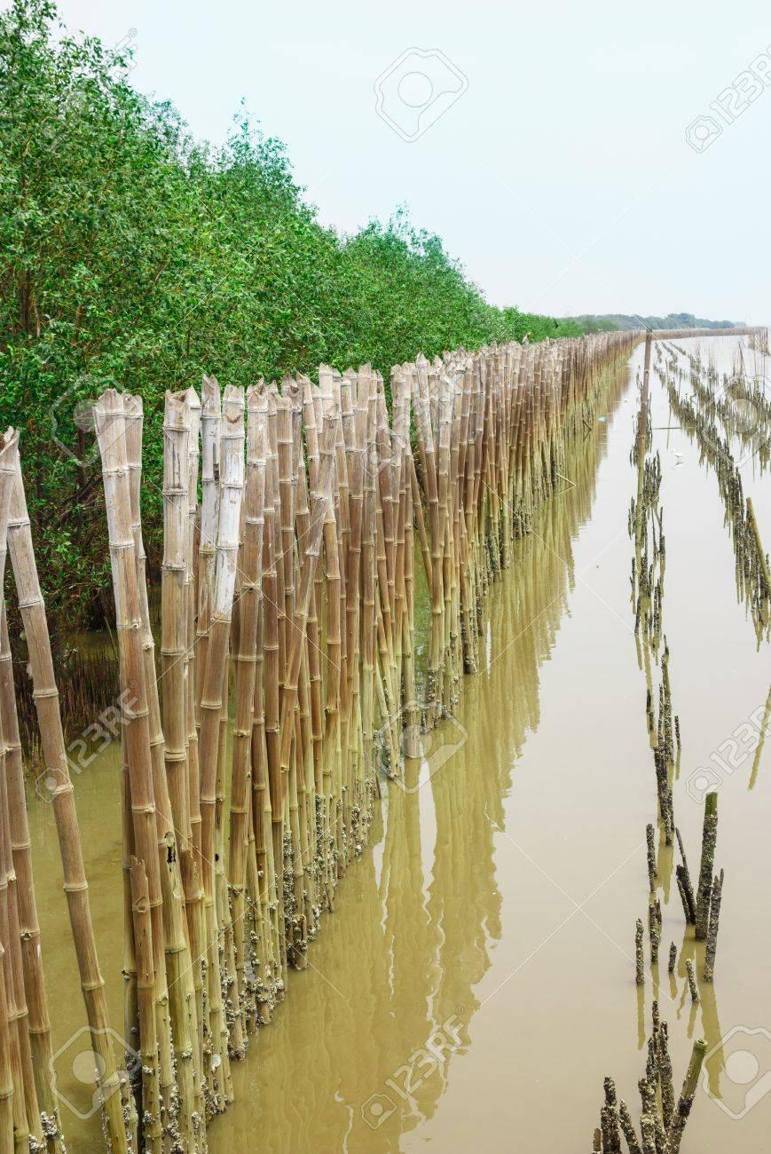 Barrière En Bambou Pour Protéger La Forêt De Palétuviers, Banque D ...