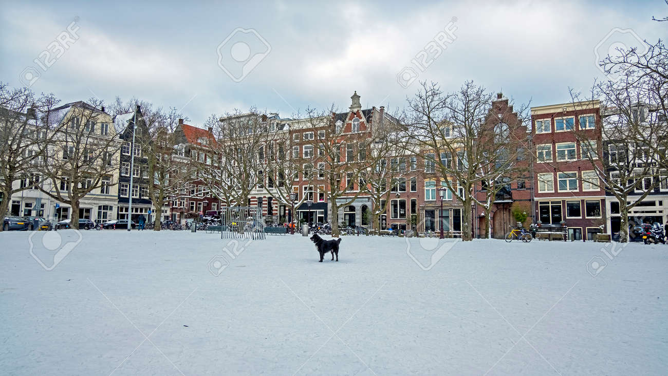 City scenic from a snowy Amsterdam in winter in the Netherlands - 172653546