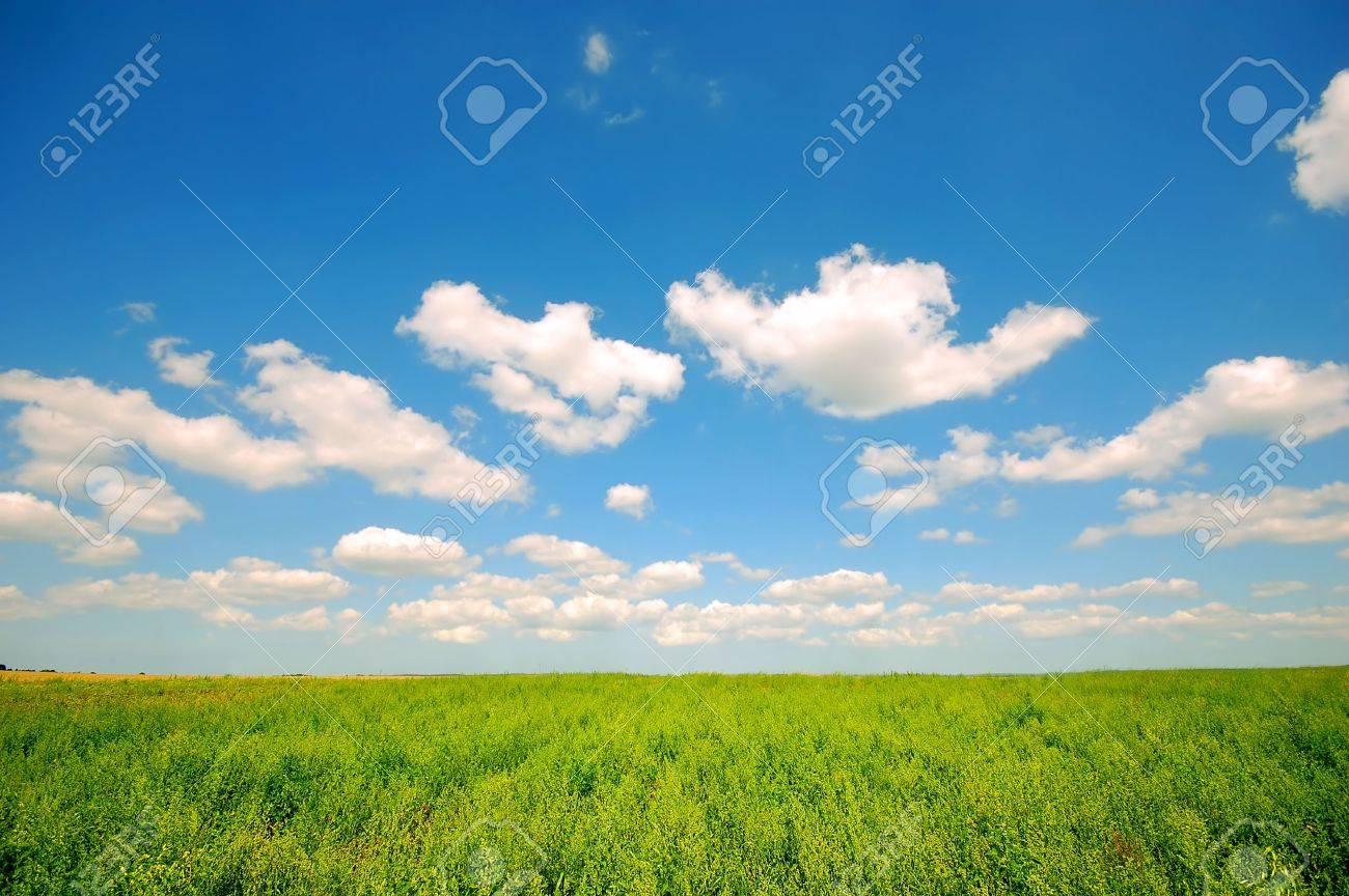 Fresh green corn field on bright blue sunny sky background Stock Photo - 1895408