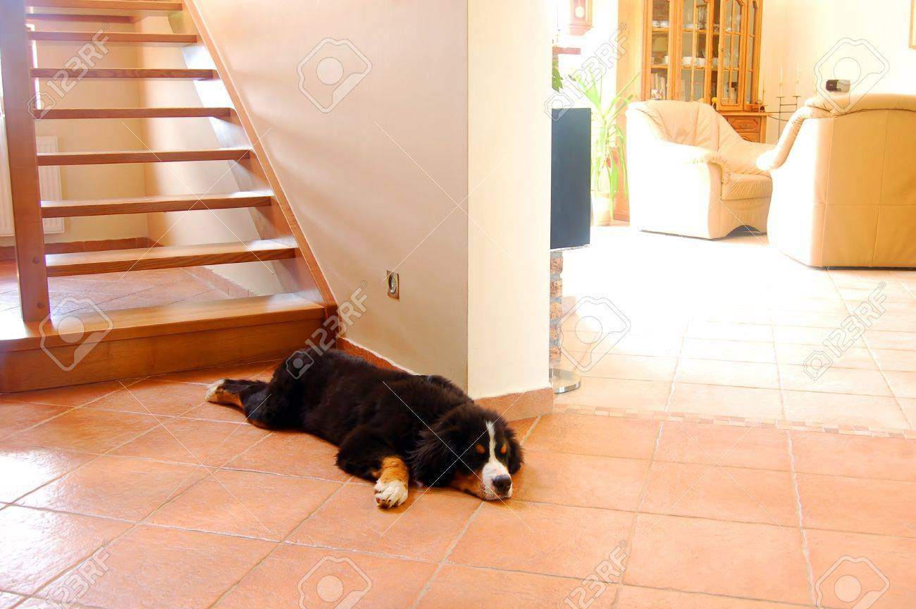 home interior and dog lying next to stairs stock photo 2016886 - Next Home Interiors