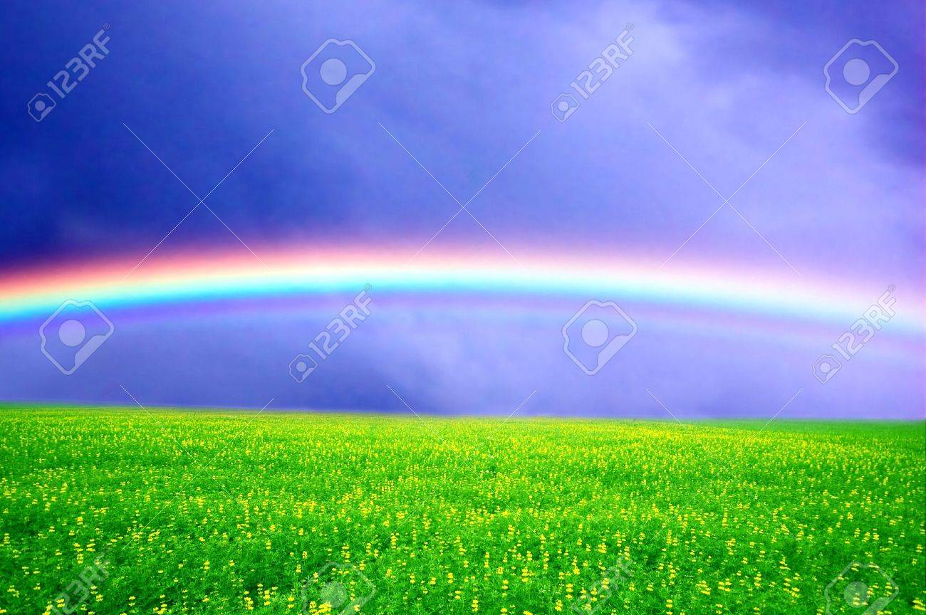 field of green grass over rainbow sky stock photo picture and