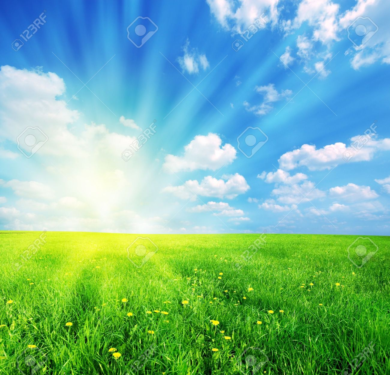 Green grass and blue sunny sky spring landscape. Perfect for backgrounds Stock Photo - 4415880