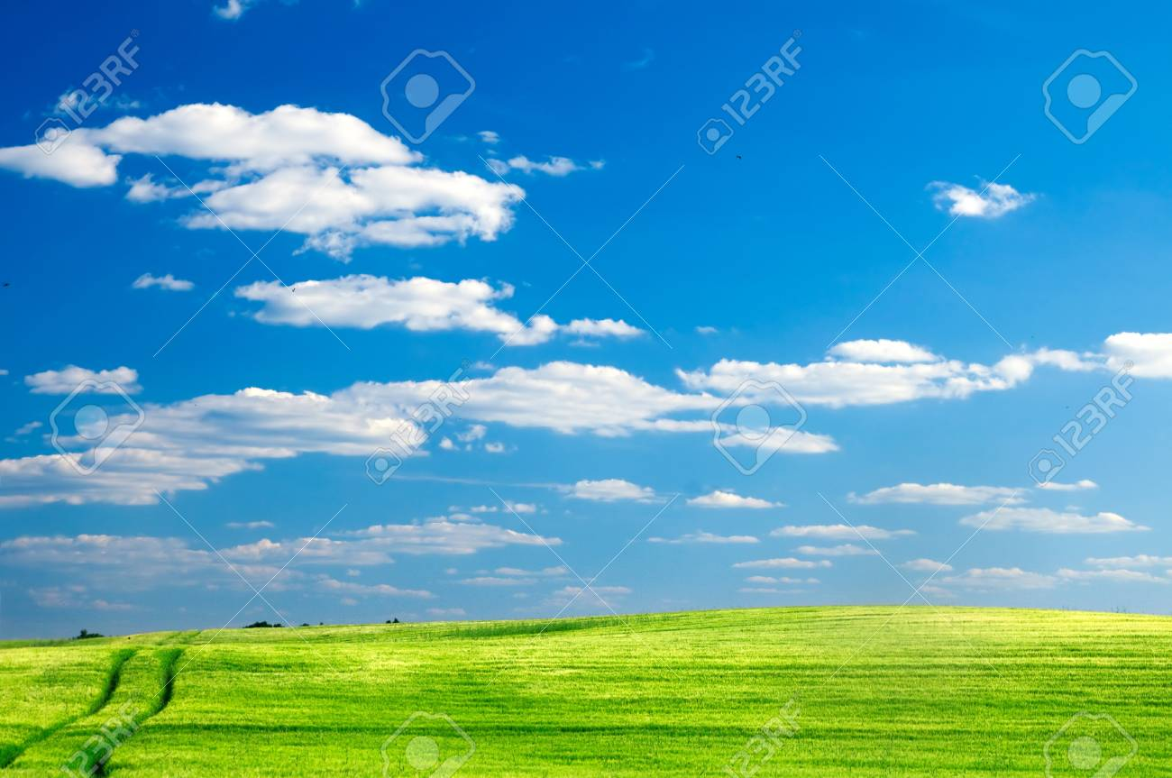 Summer landscape. Green field and blue sky Stock Photo - 8105734
