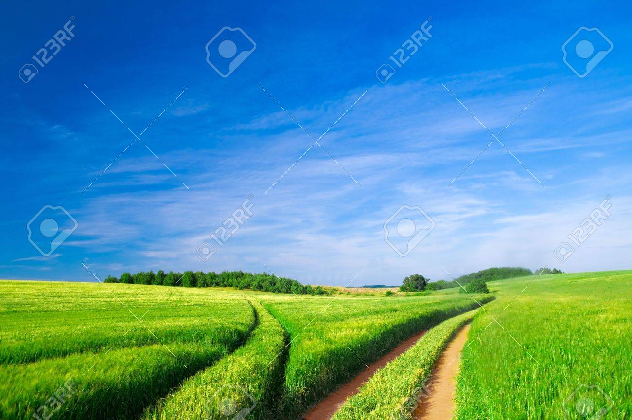 Summer landscape. Green field, trees and blue sky - 8105786
