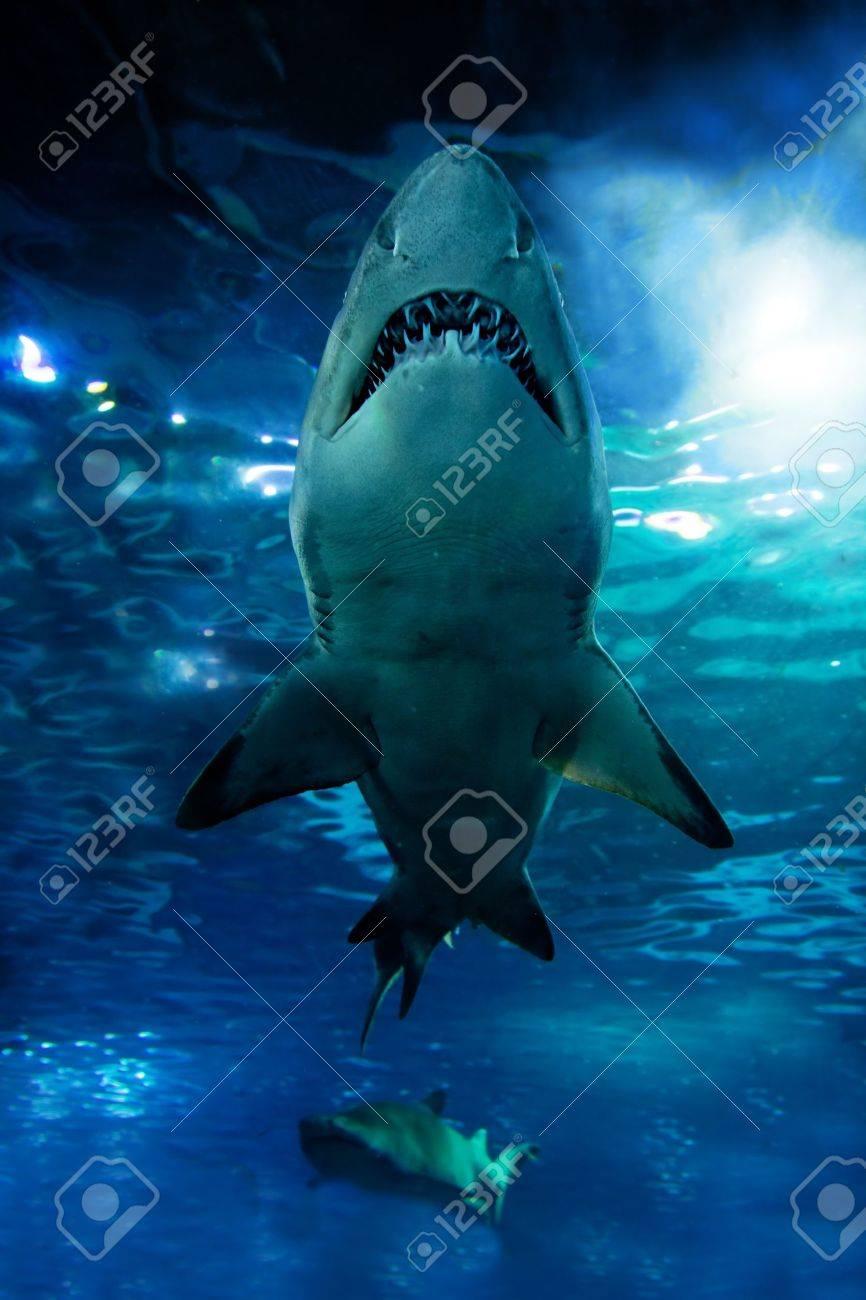 Shark silhouette underwater. Danger concept - 10803688