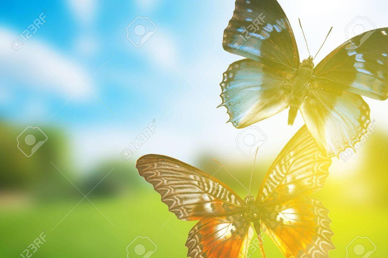 Spring Butterfly Wallpaper Desktop - WallpaperSafari